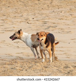 Dog mating