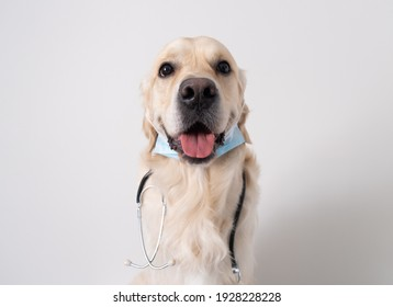 A dog in a medical mask with a stethoscope sits on a white background. Golden Retriever in a doctor's suit. Coronavirus and animals.