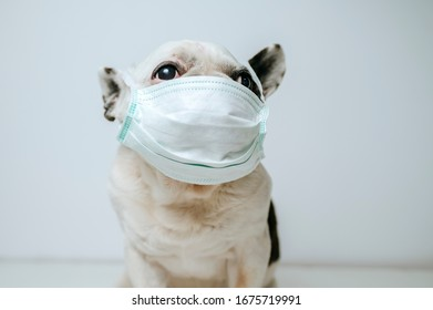 Dog with medical mask, virus protector