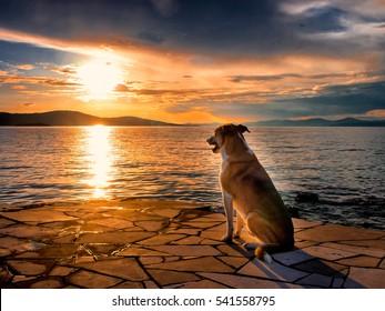 dog at the mediterranean sea, sunset