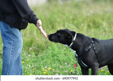 Dog Meeting a person