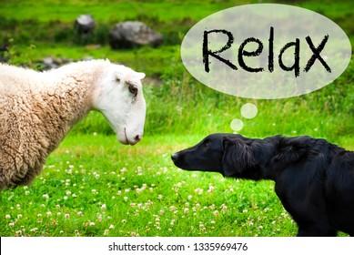 Dog Meets Sheep, Text Relax, Green Grass