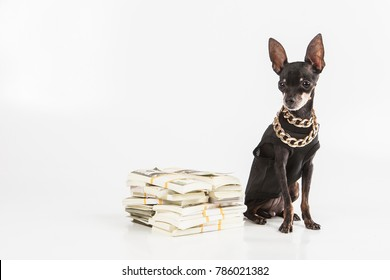 The dog is a millionaire. A rich dog. A dog with money.
