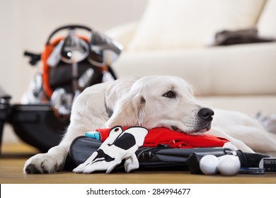 Dog is missing his owner golfer that packing suitcase to golf tour