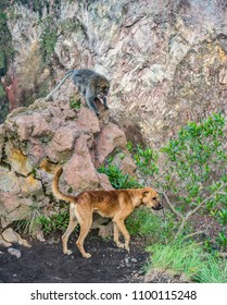 Dog and monkey playing hide and seek on the rocks. Wildlife animal and pet being firends. Animal friendship