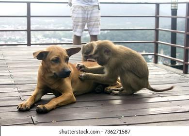 dog monkey in thailand
