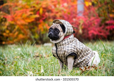 Dog Mops. Dog walking in bad weather. Warm clothes for dogs