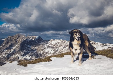 a dog at a mountain with snow