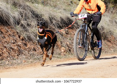 A dog and its musher taking part in a popular canicross with bicycle (bikejoring)2