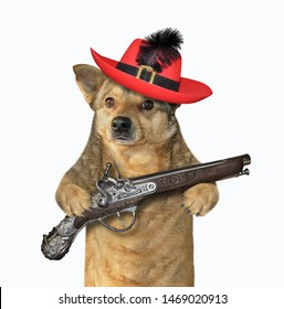 The dog musketeer in a red hat with a feather holds a flintlock pistol. White background. Isolated.