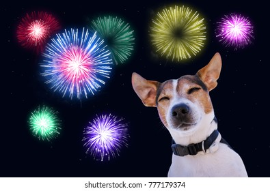 Dog muzzle closed eyes jack Russell terrier against the sky with fireworks. Safety of pets during fireworks concept in Christmas and New year
