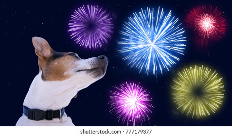 Dog muzzle jack russell terrier against the sky with colored fireworks. Safety of pets during fireworks concept in Christmas and New Year