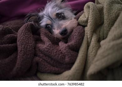 Dog Nap time