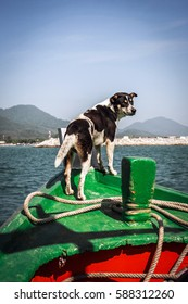 Dog Navigating From the wooden boat nose. Thailand, Ko Chang island.
