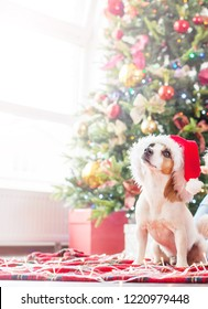 Dog near christmas tree. Happy Christmas and New Year