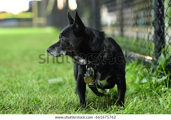 Dog near a fence on a baseball field
