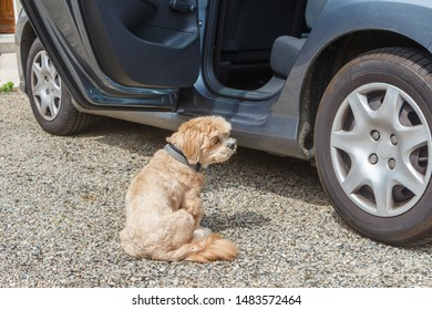 Dog near the open door of a car