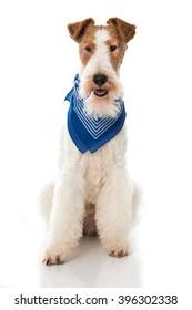 Dog with neckerchief