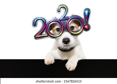 dog new year with paws over black edge. wearing  glasses with the text 2020, on a white background