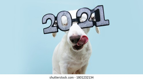 """dog new year with  wearing glasses with the inscription """"2021"""", isolated on blue background"""