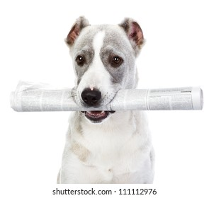 dog with newspaper. isolated on white background