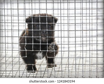the dog nibbles the cage in which it is locked. Puppy wants to break free. Caged. Concept