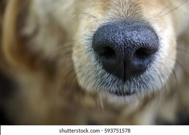 Dog. Nose. Close-up.