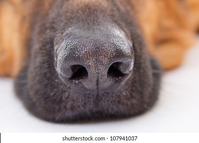 the dog nose knows best