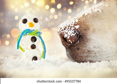 Dog nose sniffs at a miniature coconut flakes snowman