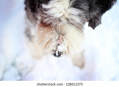 Dog nose with snow