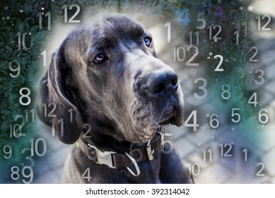 Dog and numbers, numerology for animals