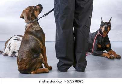 dog obedience class with instructor