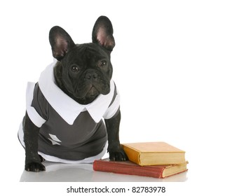 dog obedience school - french bulldog wearing shirt sitting with books