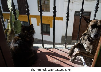 Dog Occupying Cat's Toilet on a Balcony in Granada's Albayzín, Spain