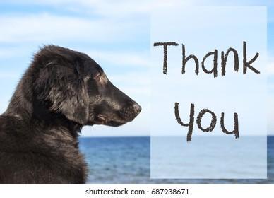 Dog At Ocean, Text Thank You