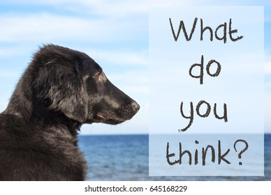 Dog At Ocean, Text What Do You Think