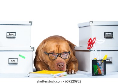 Dog in office.  Boss,  manager , office workers .   Blockage at work, waiting for leave, a lot of work, fatigue