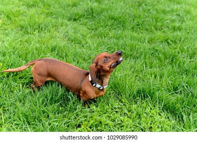 dog on the background of green grass