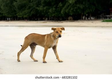 The dog on the beach.