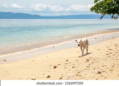 Dog on a beach in Bunaken National National Park, Sulawesi, Indonesia
