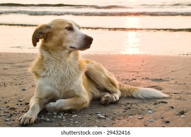 dog on the beach a full-length portrait