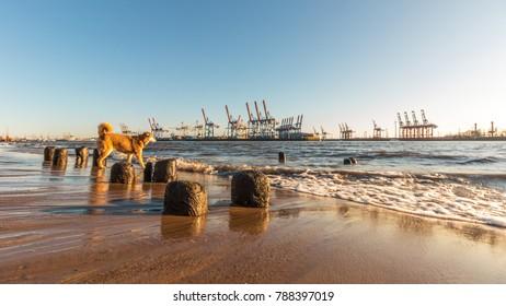 Dog on the beach, Hamburg, Elbe