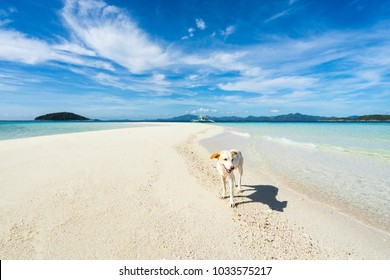 Dog on the beach with islands and boat on background. Coron, Palawan, Philippines.