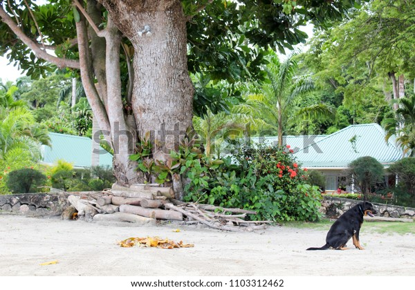 dog on a beach in Jamaica with a tree and house in backround