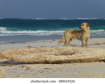 Dog on beach next to log, beautiful color scheme