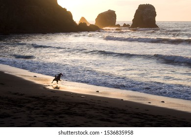 Dog on Beach Playing Catch at Sunset