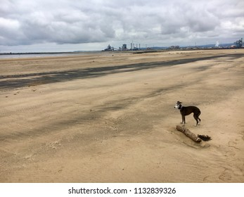 Dog on beach, Seaton Carew Sand Dunes, Hartlepool, England