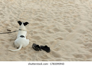 dog-on-beach-watches-over-260nw-17833909