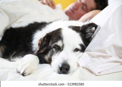 dog on the bed with his head on the pillow, beside his sleeping owner