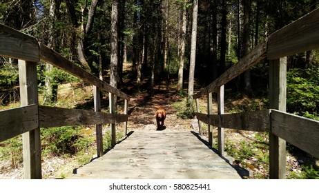 Dog on the bridge